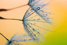 Drops & Bubbles