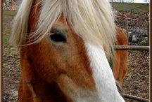 Chevaux Horses / Photos de chevaux