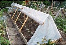 invernaderos hortalizas