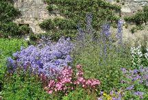 Piante erbacee perenni / Le erbacee perenni sono piante che non sviluppano strutture legnose come gli arbusti, ma sono in grado di sopravvivere al susseguirsi delle stagioni per più di due anni continuando a svilupparsi ed a fiorire per lungo tempo, allietando il nostro giardino con i loro colori.