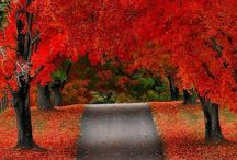 Seasons / by Meag Mc