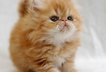 Adorable Animals / by Jessica Sweet