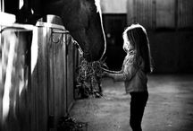 Horses, my greatest  passion... / by Connie Brydl