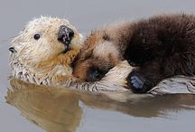 Otters / I love these animals!
