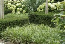Lush Plant Combinations.