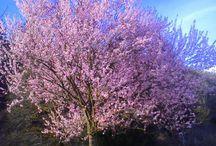 Naturaleza florida / Exuberancia primaveral