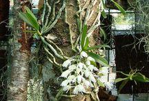 Orchidaria