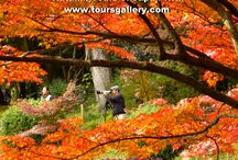 Autumn in Japan with Toursgallery / Photos taken on small group tours in Japan with www.toursgallery.com Join our next tour to see this for yourself.