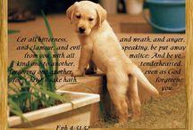 Bible Verses / by Linda T