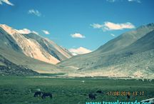 Vegetation across Trans Himalayas / Travel Tips