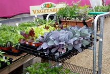 Inch by inch, row by row / Vegetable Gardening, Tips, Ideas,