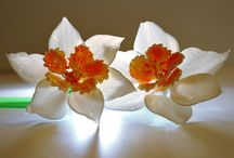 Glass Flowers  / and Shapes of Natura Rudolph and Leopold Blaschka