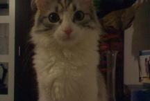 Cat / love cat <3