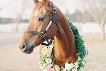 Animal wreath
