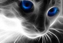 smoky cat