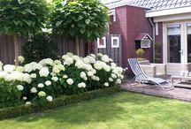 haies fleuries hortensias blancs et arbres