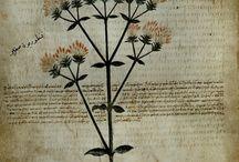 Botanicals Books & Drawings
