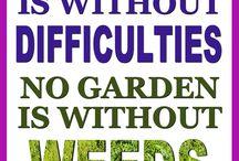 Garden Graphics/Random Thoughts