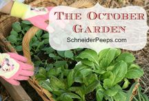 Veggie  greenhouse garden / by Becky Steele