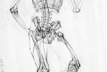 Anatomy - Drawing References