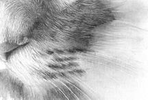 how to draw animal fur in pencil