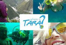 TravelTourism