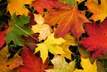 Seasons - Autumn / Some things to look forward to in this beautiful season.