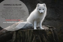 Animals and Islam / Bismillah! What does Islam say about Animal Rights?