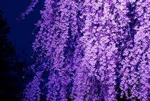Purple / Love all things purple