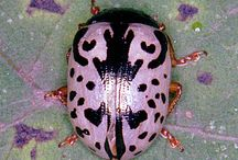 coloured beetles, insects