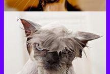 Kitties and odhers