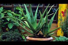 faydalı bitkiler