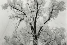 Tree - Forest / by Bora Çıracı