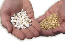 Sorghum Food / Recipes, pictures and uses of sorghum for food
