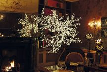 For the Home / Enchanted Trees look stunning outdoors, but can also add an amazing atmosphere in the home