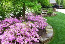Landscaping Ideas / Some of the landscaping jobs we have installed or maintain.  See our plants, lawns, trees and more.