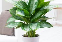 HOME PLANTS / To De-Stress Your Home And Purify The Air