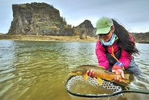Fly Fishing Commentary / Things to think about within our fly fishing niches...