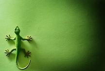 Cor - Verde   ❤Green❤