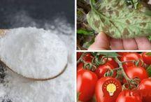 rady do zahrady-soda důležité