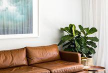 szobanövény