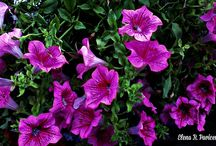 ✿ FLOWERS ✿ / Photography of Flowers - Beauty of Flower - Flowers from around the world