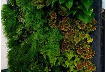 vertikal gardens