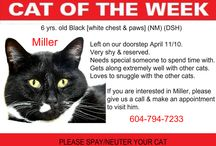 Cat of the Week 2016 / Cat of the Week 2016