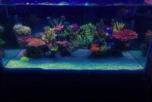 Reef / Ideas marinos