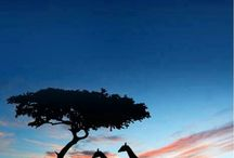 Это Африка!! Ирен де Лео