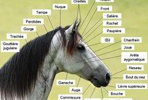 Pour l'équitation