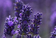 purple etc.
