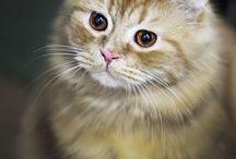 кошки / для рисования