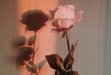 Roses (tumblr)